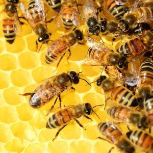 Coque cire abeille Melicare